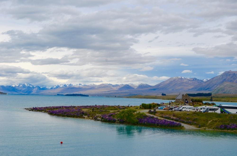 Lake Tekapo, Lupine Season, New Zealand