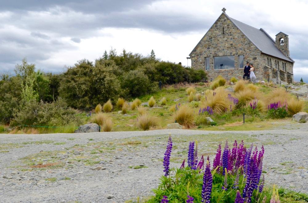 Lake Tekapo, Lupines, New Zealand