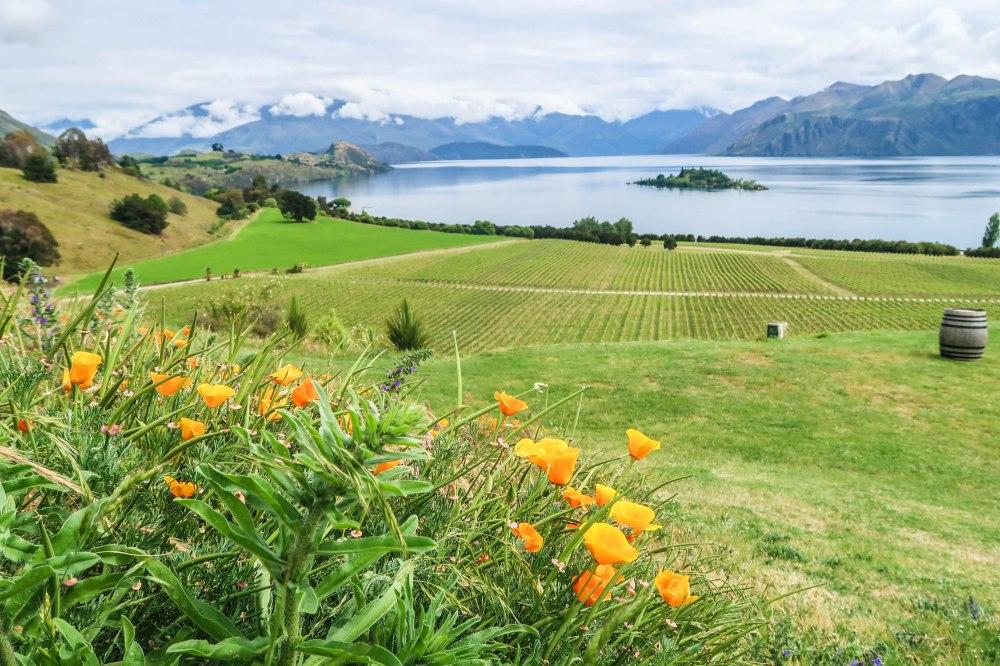Rippon Valley Winery, Lake Wanaka, New Zealand