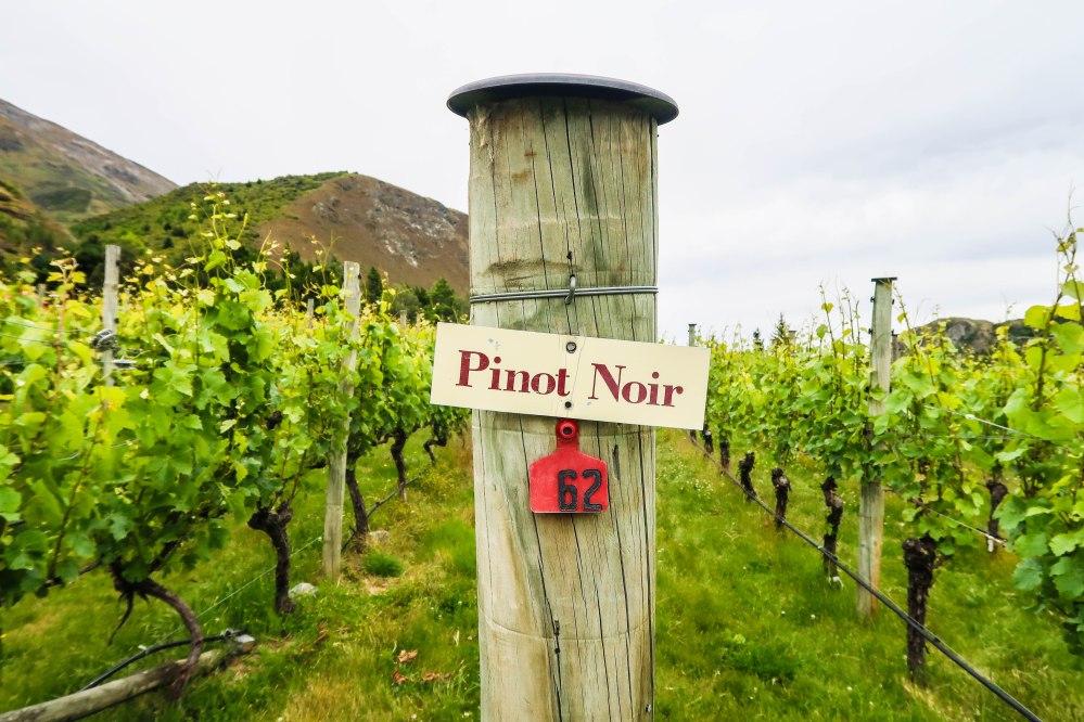Gibbston Valley Winery, New Zealand